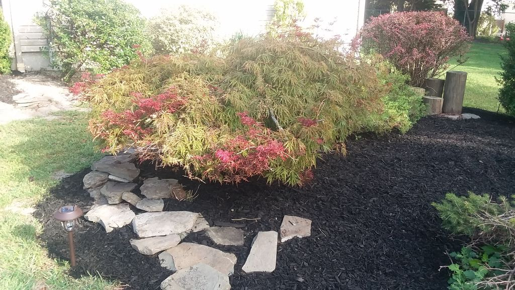 Clean up beds and remulch