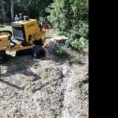 Avatar for Gainesville Stump Grinding