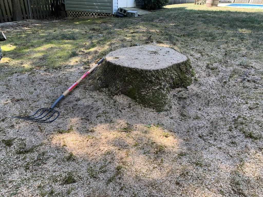 Recent Stump 2