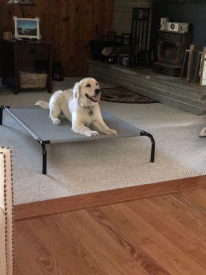 Avatar for Jumping Jack's Dog Training + Pet sitting North Java, NY Thumbtack