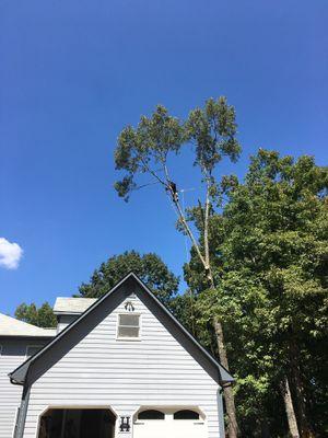 Avatar for Atlanta Tree Climbers Canton, GA Thumbtack