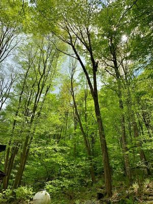 Avatar for Hardline Tree Service
