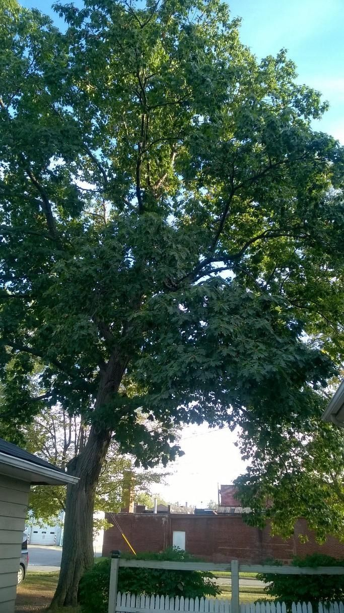 Tree Trimming and Removal - Lorain 2019