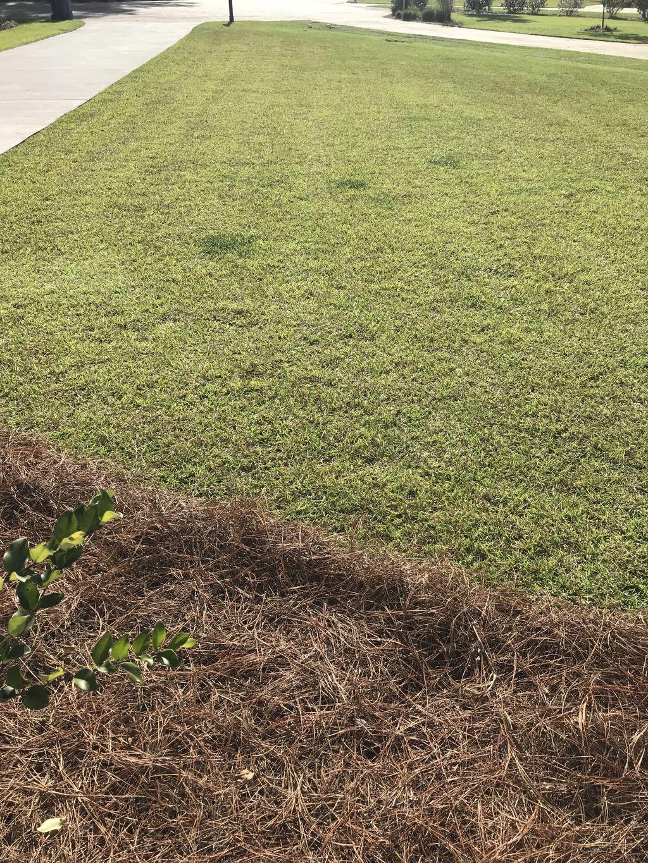 Mulch mow, trim, edge, blow