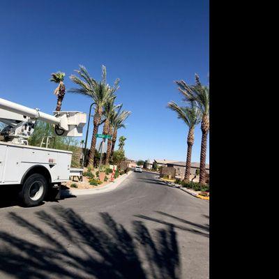Avatar for Vargas tree service and maintenance LLC Las Vegas, NV Thumbtack