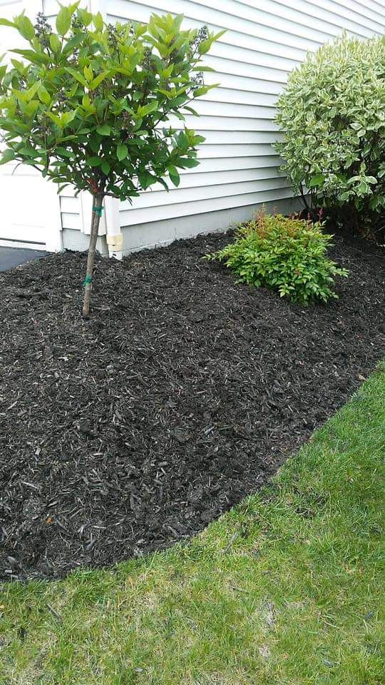 Bed edging and mulch