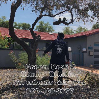 Avatar for Green Desert Stump Grinding Phoenix, AZ Thumbtack