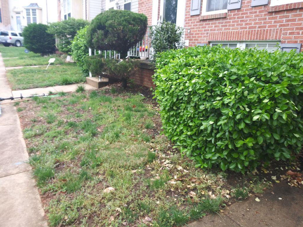 Complete lawn restoration