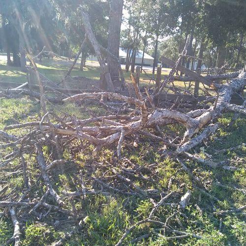 Dead pine clean up