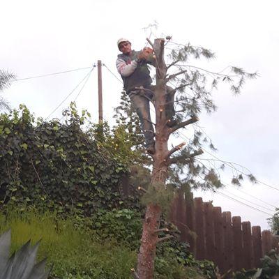 Avatar for Jimenez Gardening La Mesa, CA Thumbtack