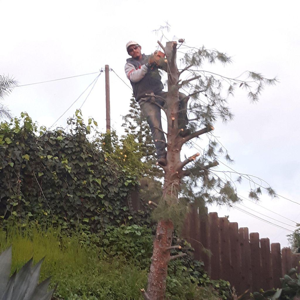 Jimenez Gardening