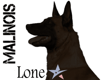 Avatar for LoneStar Malinois Gatesville, TX Thumbtack