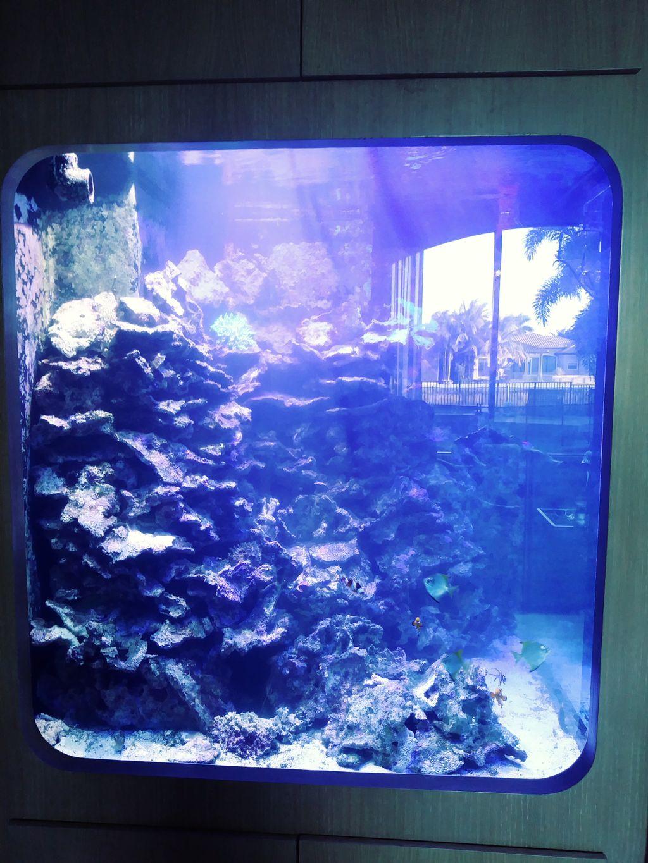 600 gallon saltwater