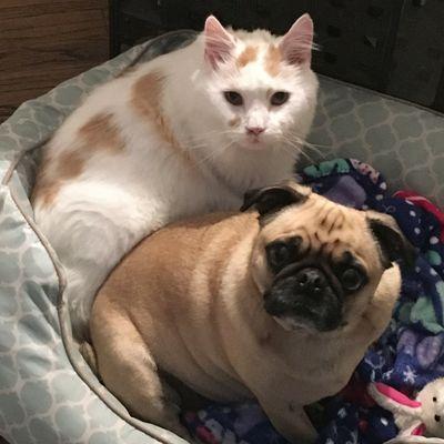 Wilson and Kiki Dog and Cat Sitting Service Clinton Township, MI Thumbtack