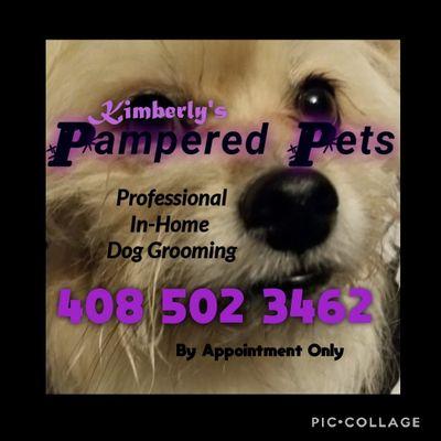 Kimberly's Pampered Pets Lacey, WA Thumbtack