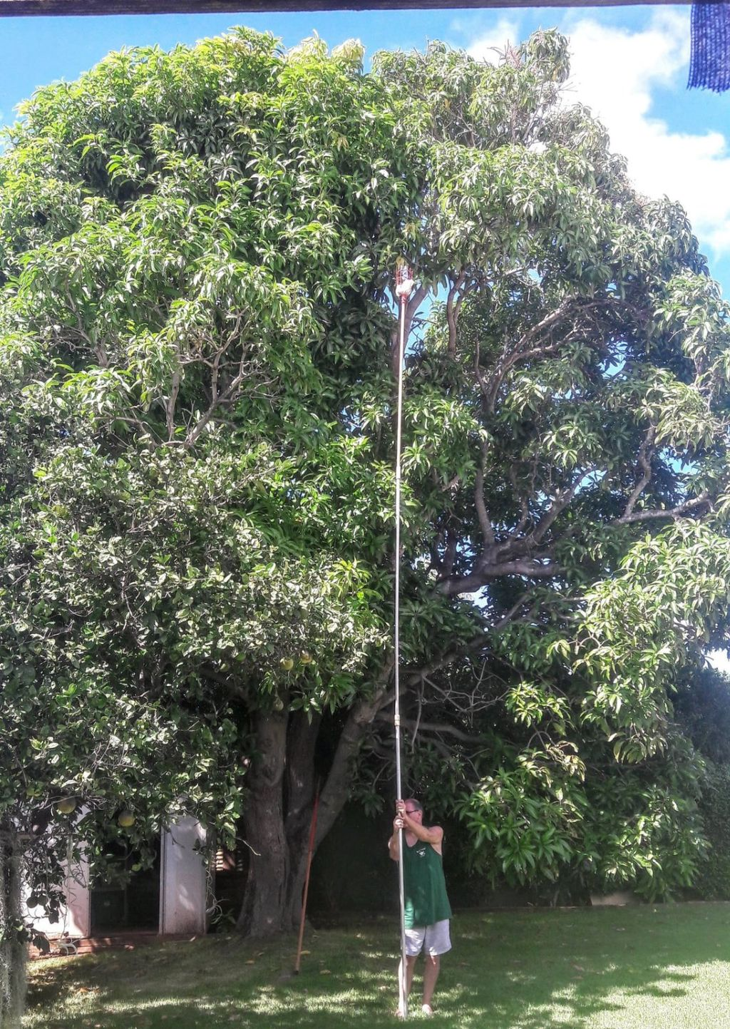 Tree Trimming and Removal - Ewa Beach 2019