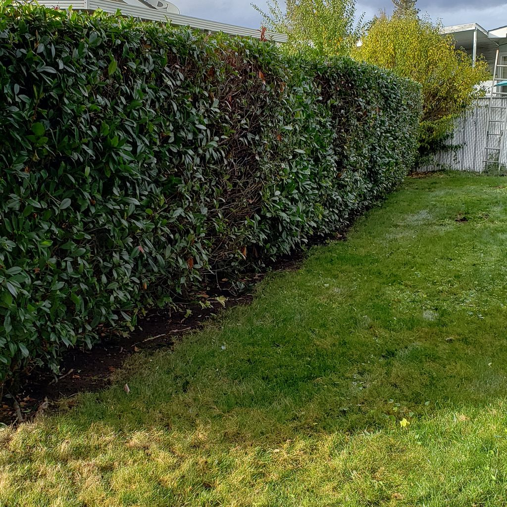 Hedge Trimming and Pruning
