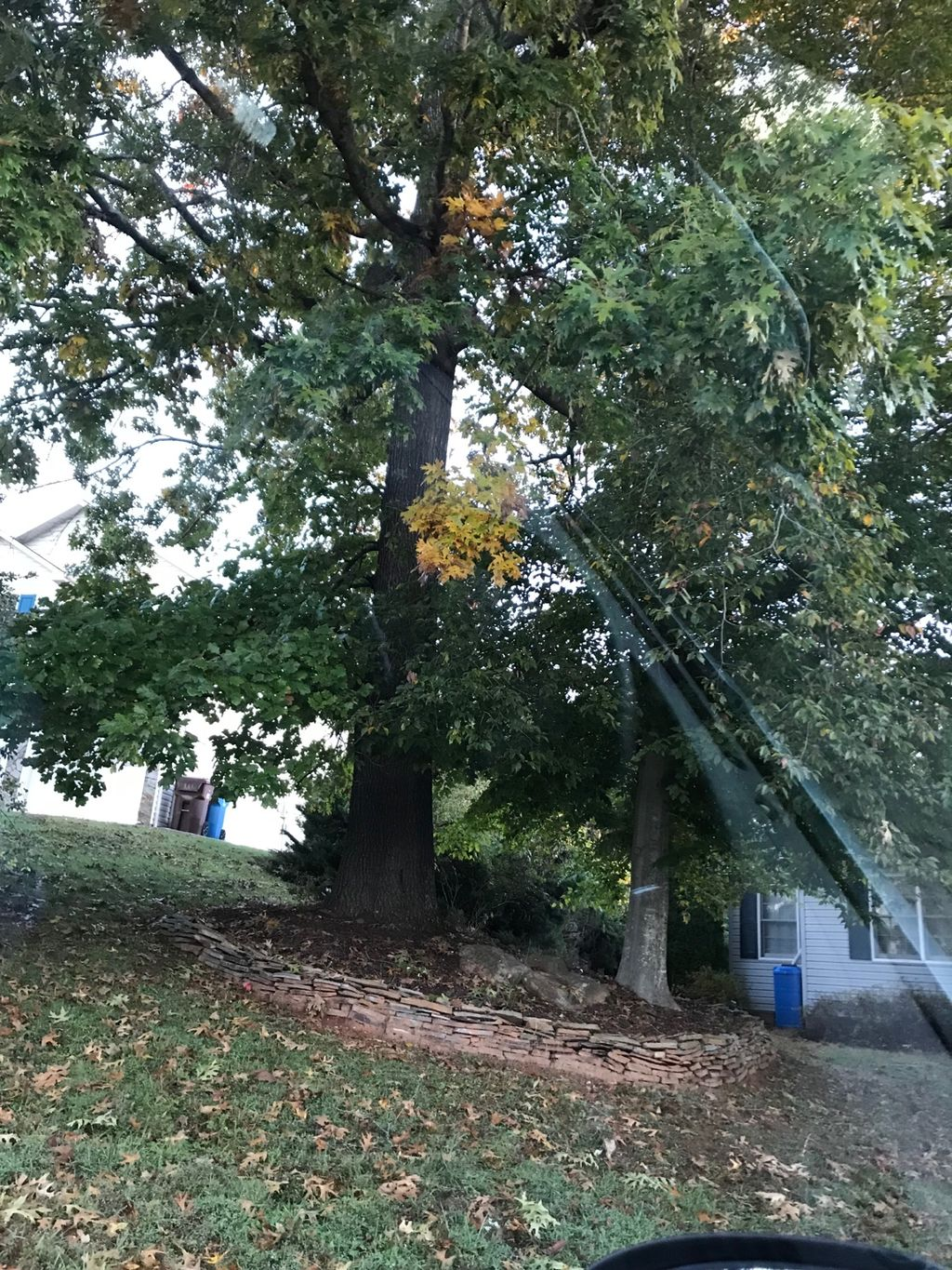 Tree Trimming and Removal - Hickory 2019