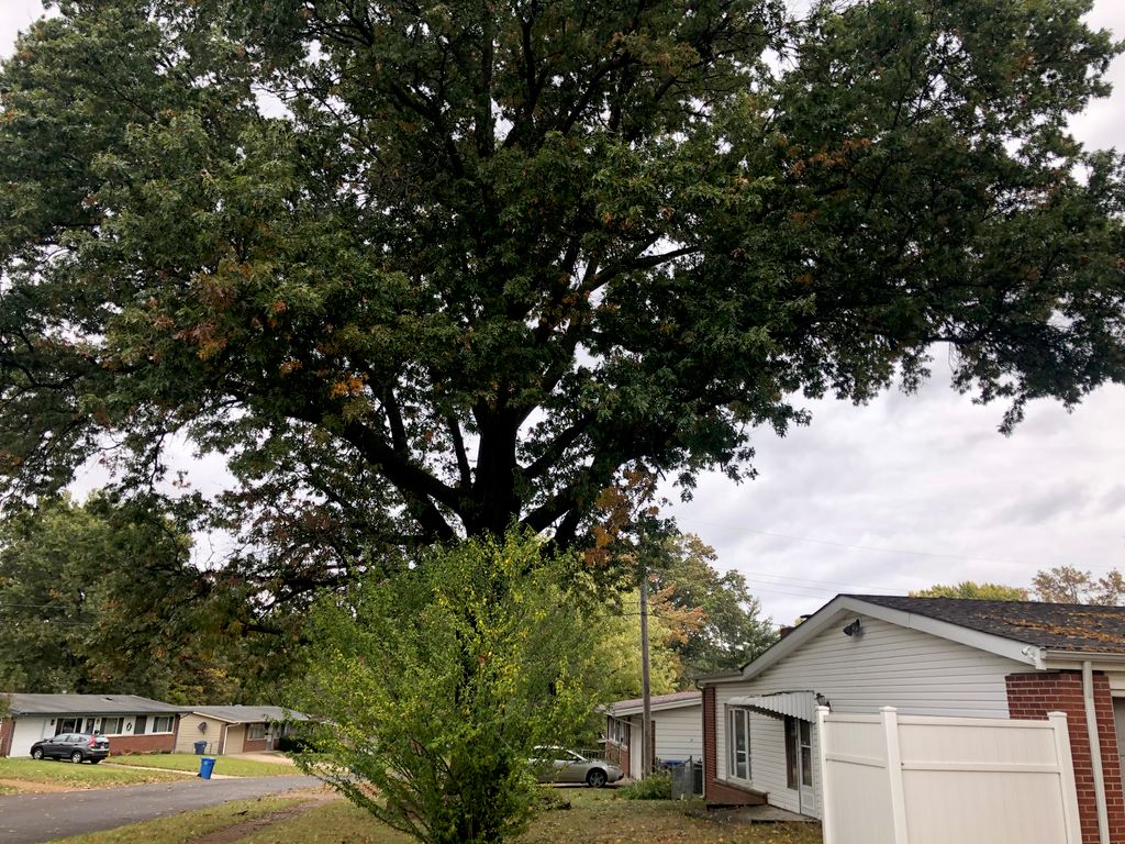 Tree Trimming and Removal - Florissant 2019