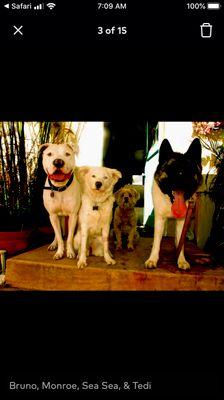 Avatar for Coastal K9 Dog Walking & Pet Services
