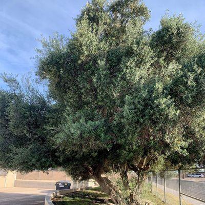 Avatar for LCD landscape Pomona, CA Thumbtack