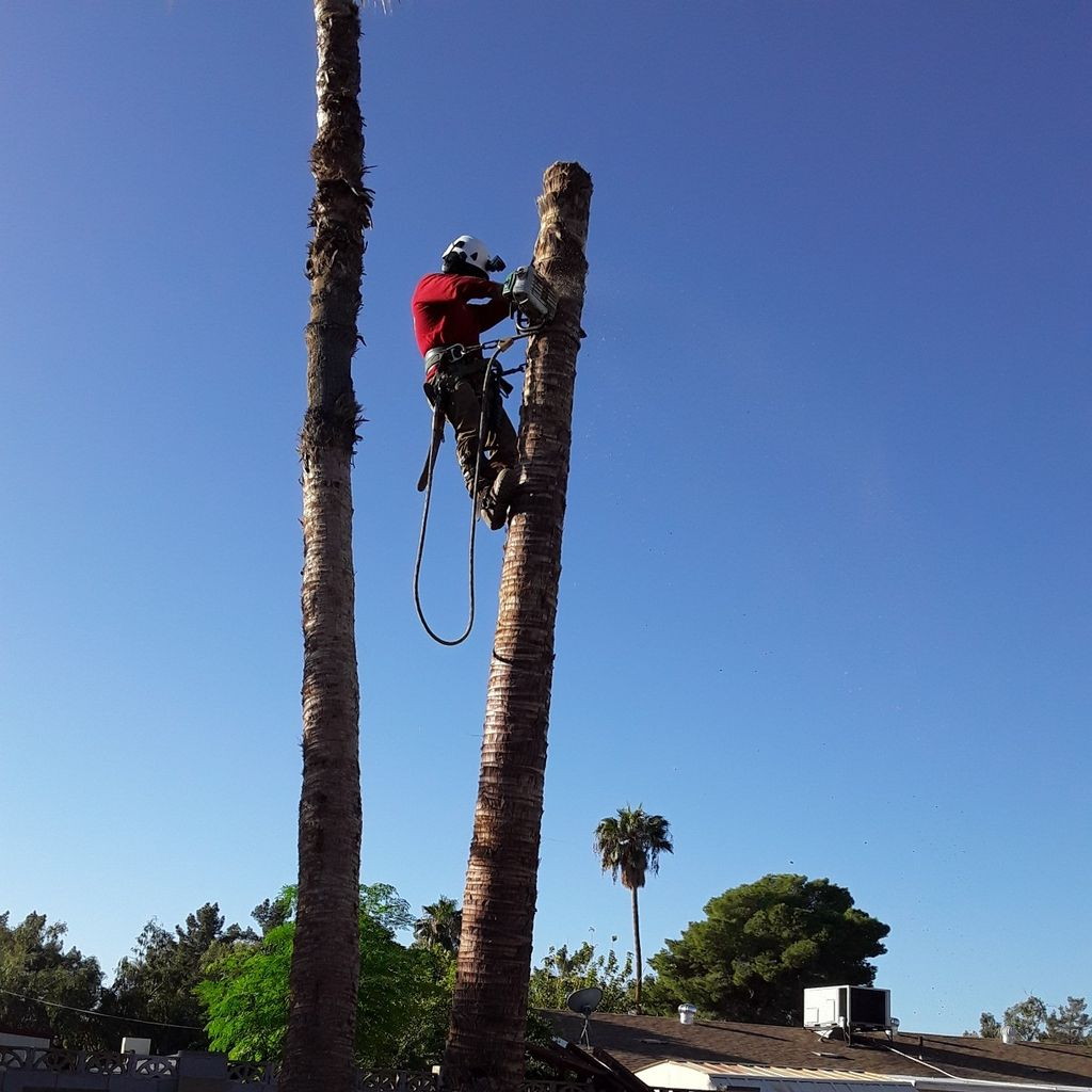 Ops tree service pro & landscaping