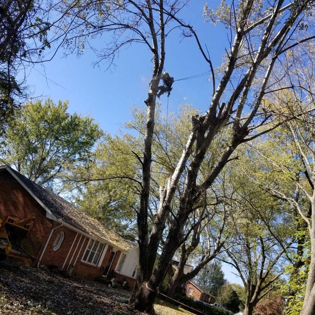 Gomez Tree Service LLC