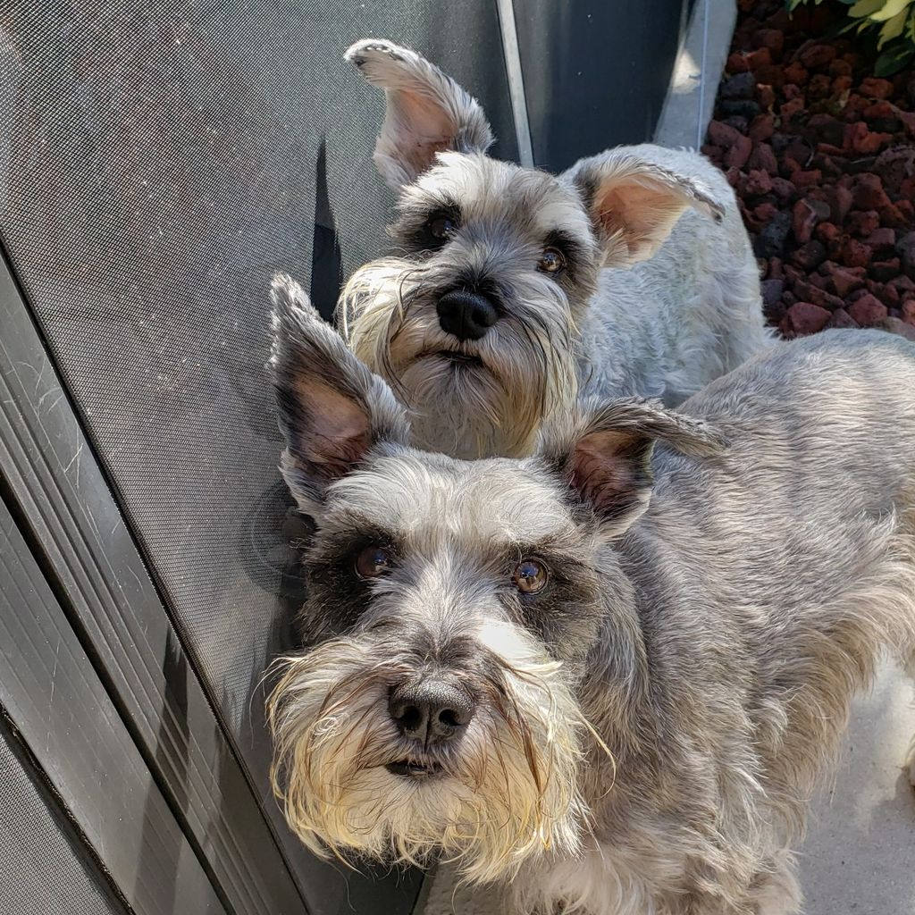 Wishbone Pet Services
