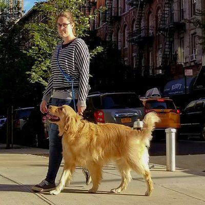 Avatar for Sundog Pet Care - Digital Dog Training New York, NY Thumbtack