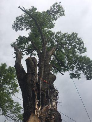 Avatar for T&A Tree Experts Harrisburg, NC Thumbtack