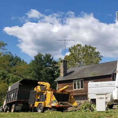 Freeland Tree Services & Landscaping Philadelphia, PA Thumbtack