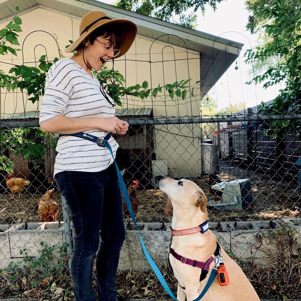 Heckin Good Dog Training