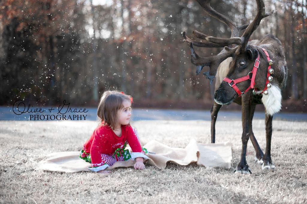 Christmas Reindeer Mini's