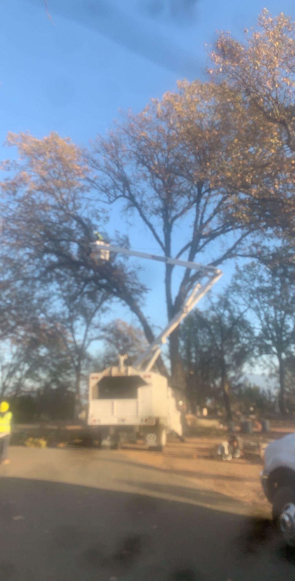 L.c.t.s tree service (lake county tree service)