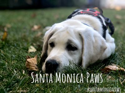 Avatar for Santa Monica Paws Playa Del Rey, CA Thumbtack