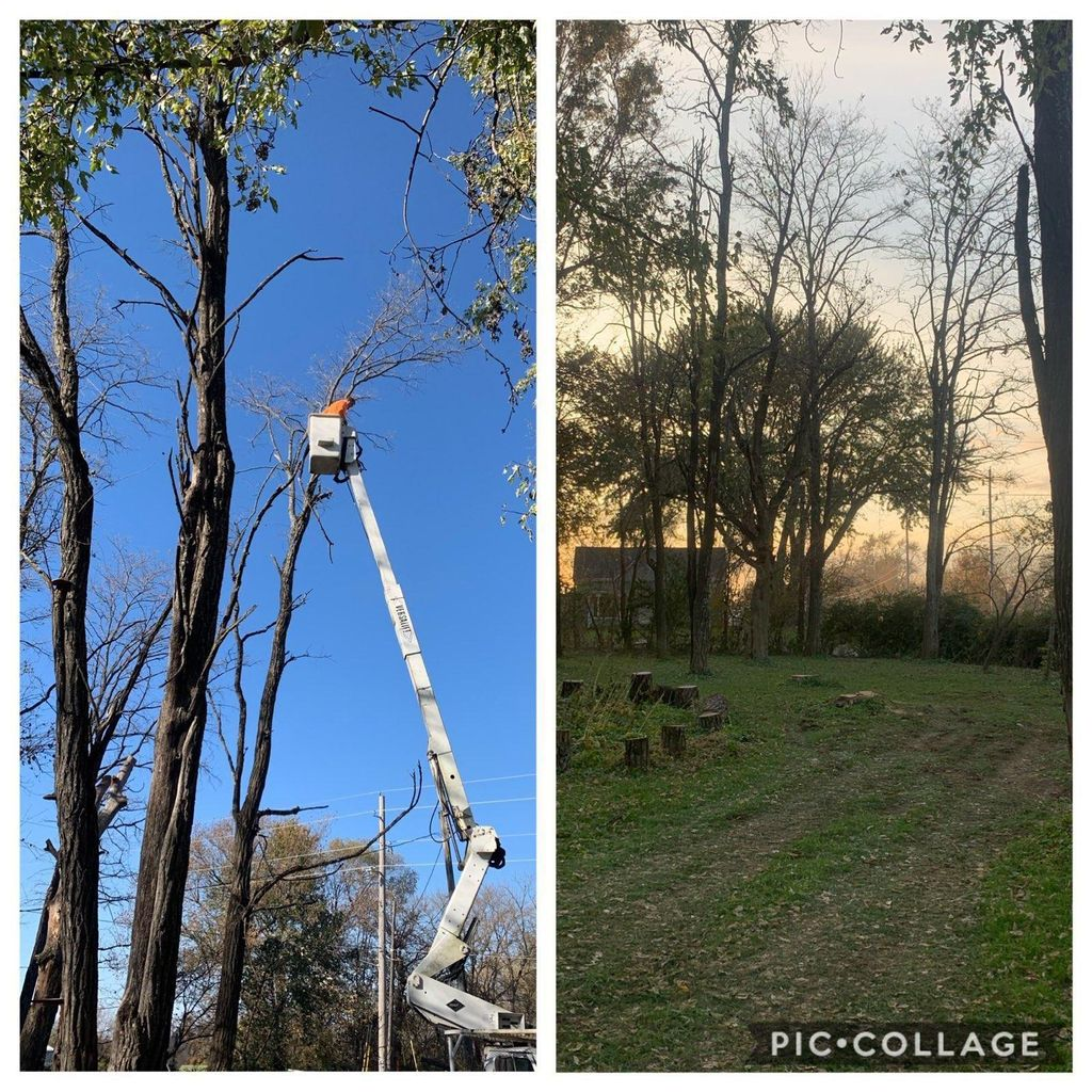 Neal's Quality Tree Service LLC