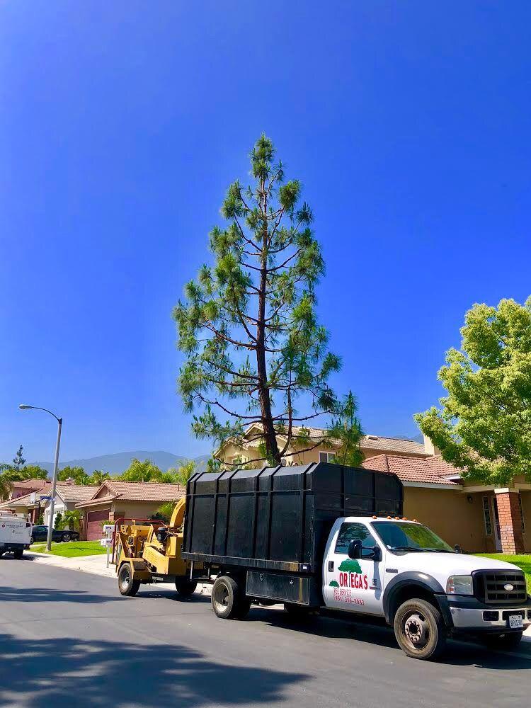 Ortega's Jr Tree Service