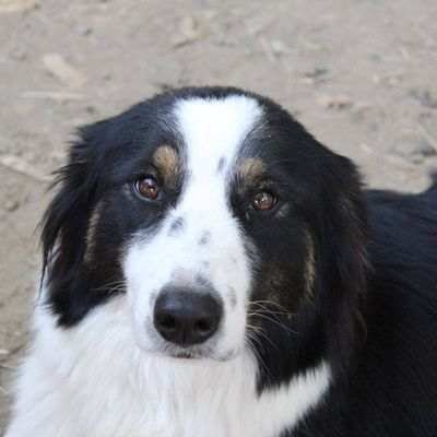 Avatar for Farm Fun for Dogs Jamul, CA Thumbtack