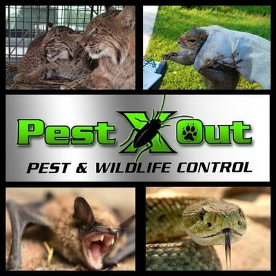 Avatar for Pest X Out Pest & Wildlife Control LLC