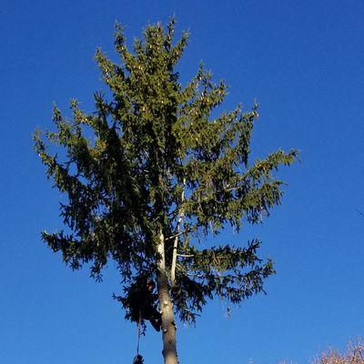 Avatar for A.merida landscaping Inc Lynn, MA Thumbtack