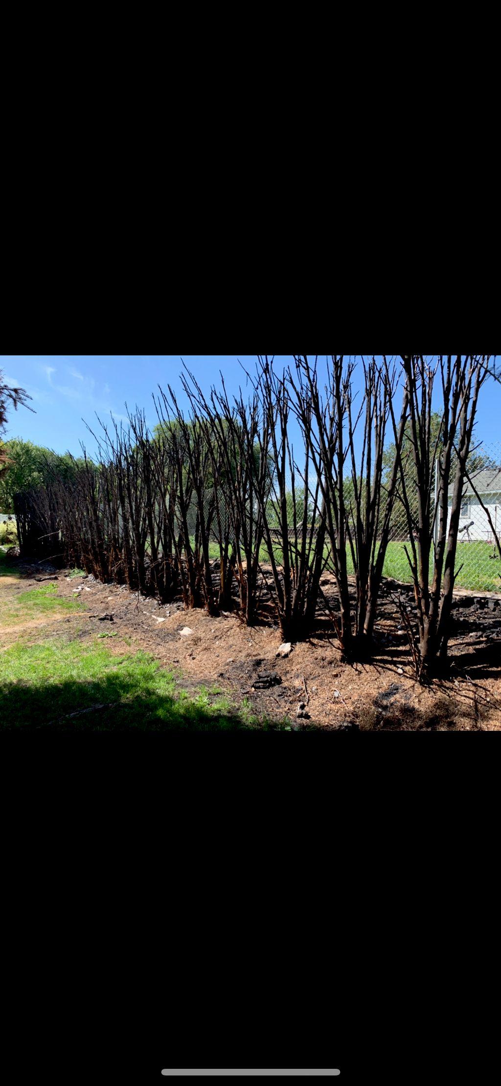 Fire damage, insurance claim