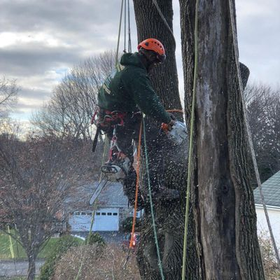 Avatar for Claudio Tree Work & landscaping llc New Milford, CT Thumbtack