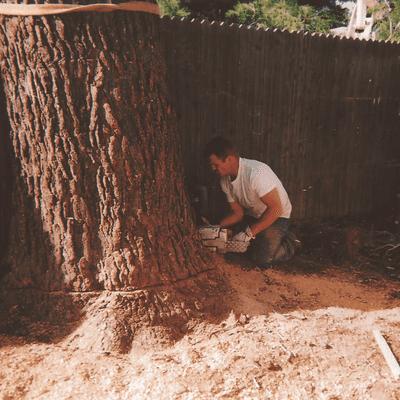 Avatar for Tree Barbers Chandler, AZ Thumbtack