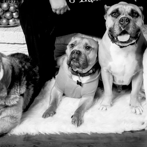 My four-legged team!