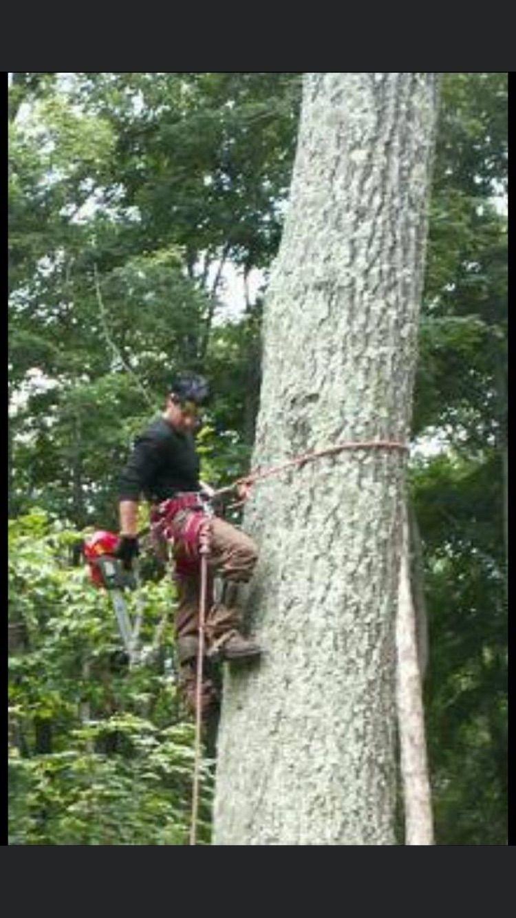 Renne tree service