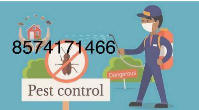 Avatar for Nuisance Pest Rmvl Dorchester, MA Thumbtack