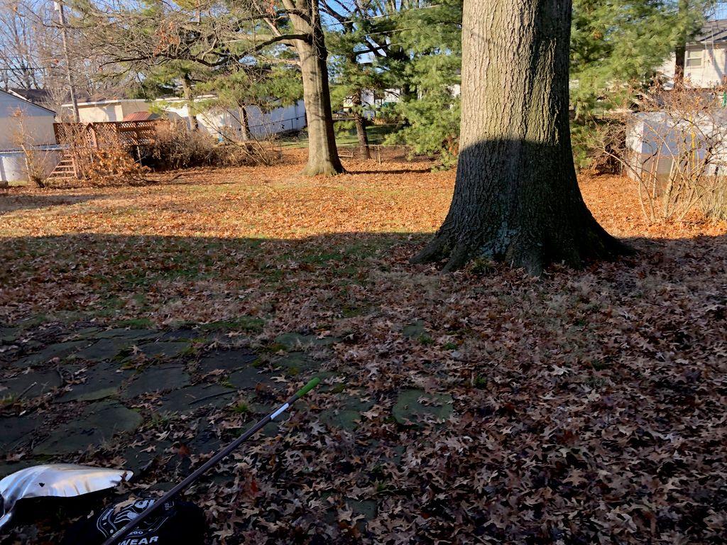 Ali's Leaf Clean Up