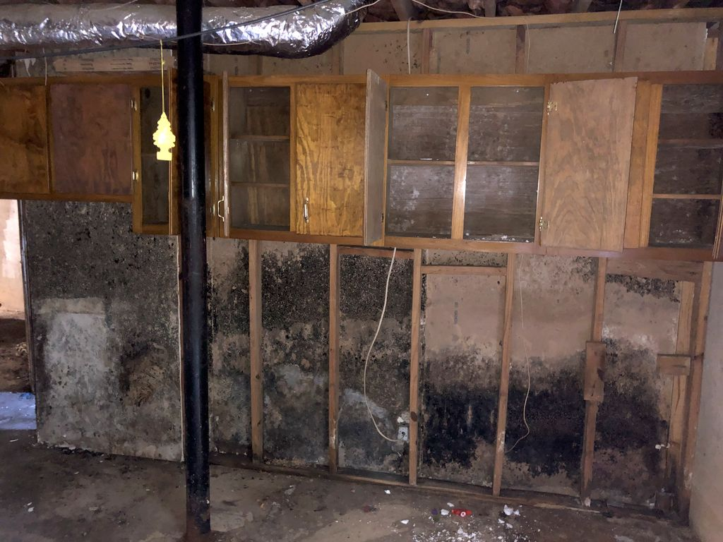 Moldy Drywall and Ceiling Tile Removal