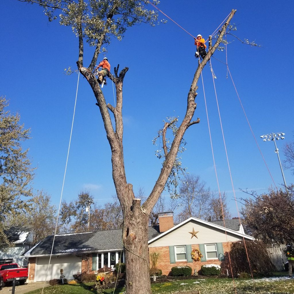 D AND B TREE SERVICES LLC