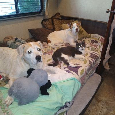 Avatar for Best Behaved Pups Fleming Island, FL Thumbtack